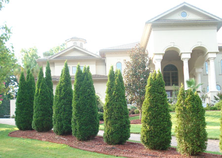 distant view of well manicured bushes in front of a large house