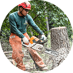Tree Removal Image